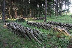 春の原木栽培