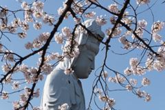 春の白衣大観音