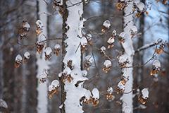 冬のドライフラワー