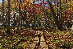 屈斜路湖の紅葉