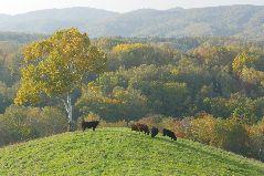 紅葉の牧場
