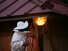 夏のスズメバチの駆除