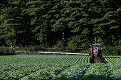 夏のレタスの農薬散布