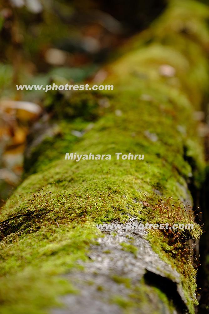 倒木の写真素材