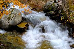 紅葉の渓流
