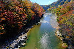 秋の綾戸渓谷
