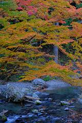 紅葉の桐生川