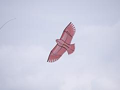 秋の鳥追いカイト