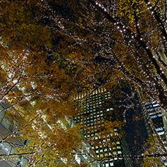 東京丸の内イルミネーションのフォト作品