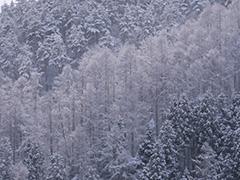 森のオリジナルプリント