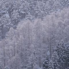 森のフォト作品