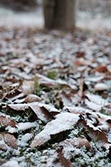 冬の落ち葉
