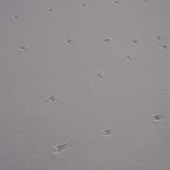 足跡のフォト作品