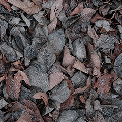 落ち葉のフォト作品