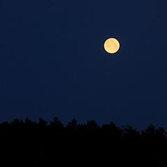 月のフォト作品