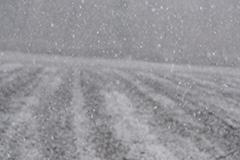 降雪のオリジナルプリント