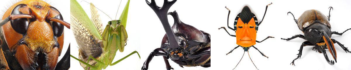 オリジナルプリント/昆虫の肖像