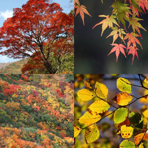 おすすめのテーマ『色づく秋』