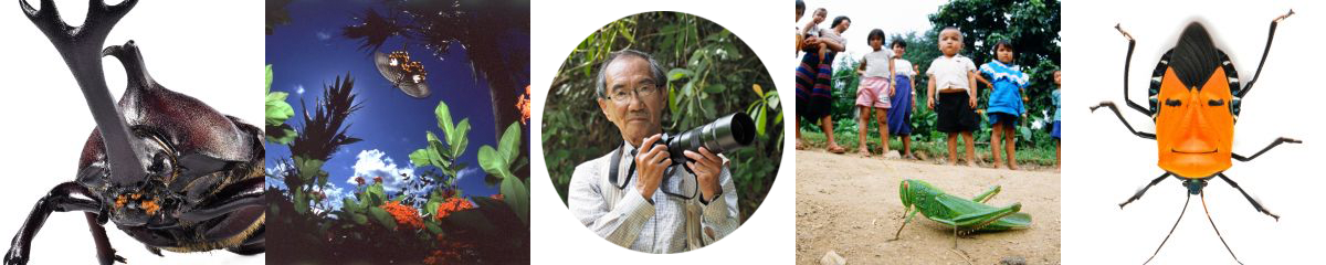写真家のテーマ『海野和男の昆虫の世界』
